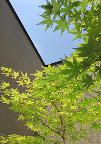 中庭・木々